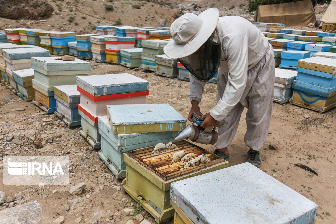 ششم مهر آغاز طرح آمارگیری کلنیهای زنبور عسل در مازندران