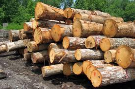 کشف ۲ تن چوب جنگلی قاچاق در بخش دودانگه ساری