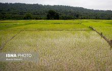بهرهبرداری چند باره از اراضی کشاورزی چالش برانگیز است