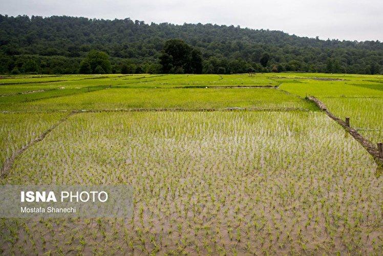 بهرهبرداری-چند-باره-از-اراضی-کشاورزی-چالش-برانگیز-است.jpg