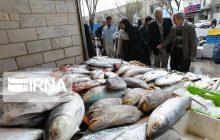 تکاپوی بازار ماهیفروشان مازندران در فصل صید