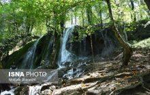 جنگلهای هیرکانی باید عاری از زباله و سازه شوند + عکس