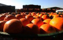 مازندران ۴۰ هزار تن پرتقال شب عید کشور را تامین میکند