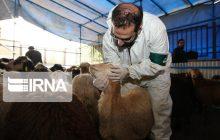 کوررنگی شغل دامپزشکی در مازندران