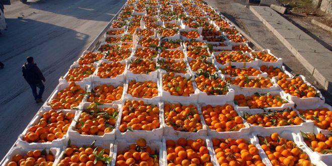 یکهزار تن نارنگی مازندران به خارج کشور صادر شد