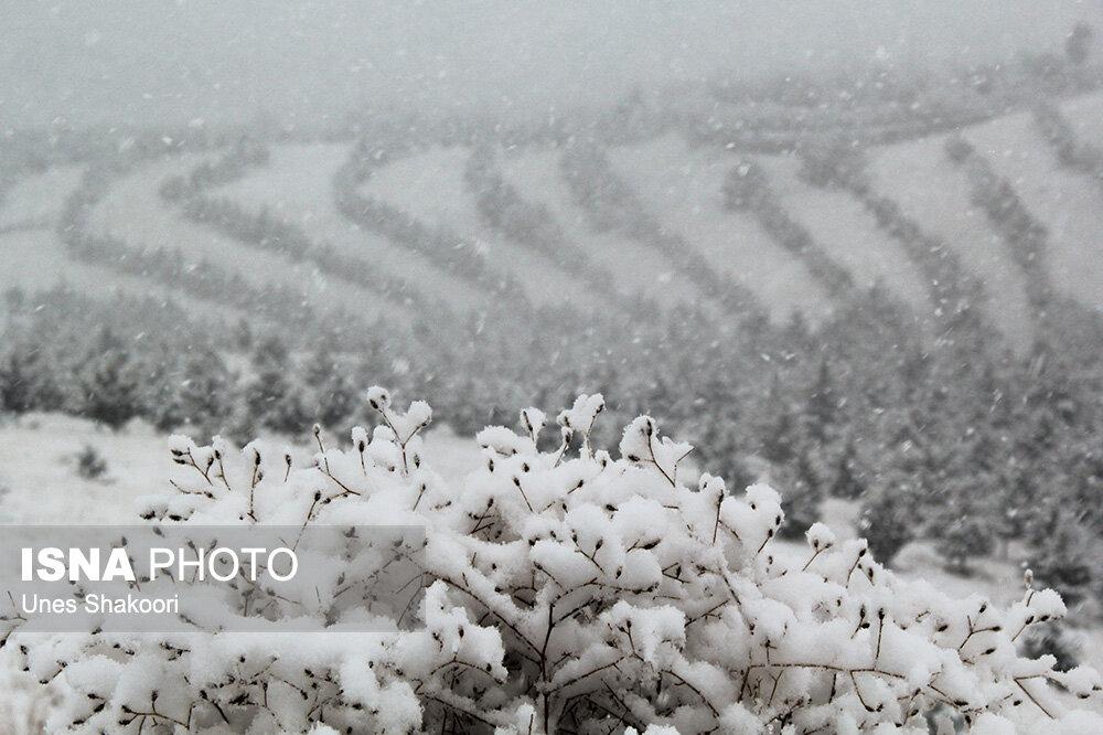بارش برف در مناطق کوهستانی نور