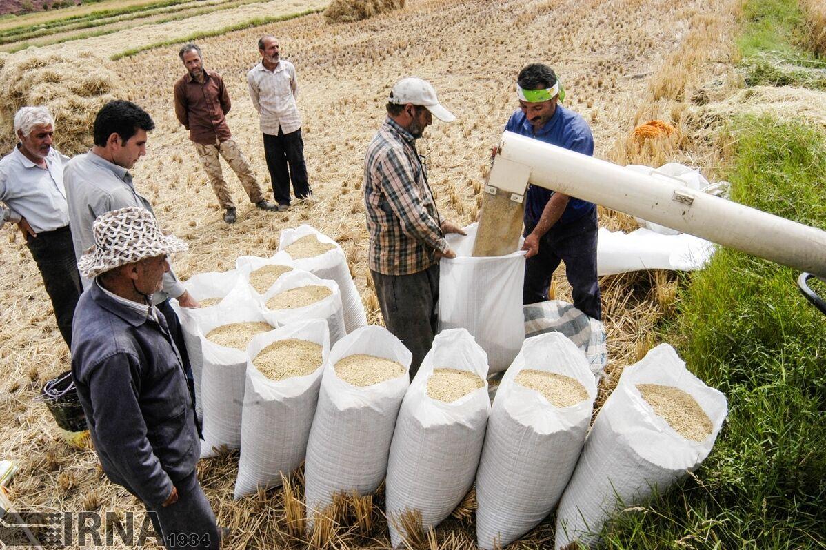 ضریب-امنیت-غذایی-کشور-به-۸۷-درصد-رسید.jpg