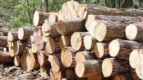 قاچاق-چوب-از-درختان-جنگل-قربانی-میگیرد.jpg