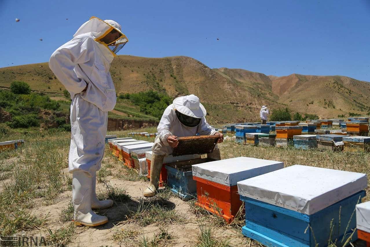 مازندران ۱۰ درصد عسل کشور را تولید میکند
