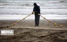 کاهش ۴۰ درصدی صید ماهی کفال در مازندران