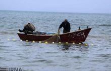 گونه جدیدی از «شانهدار خوار» در دریای خزر مشاهده شد