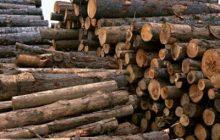 کشف ۶ تن چوب جنگلی قاچاق در دودانگه ساری
