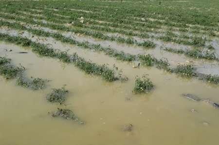 اختصاص ۲۶۴ میلیارد تومان اعتبار برای پرداخت به خسارت دیدگان بخش کشاورزی