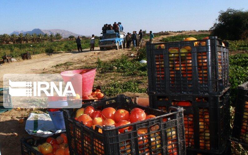 افزایش قیمت کالاهای فصلی ارتباطی با نرخ بنزین ندارد