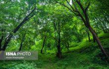 جشن ثبت جهانی جنگلهای هیرکانی ١٨ آذر در مازندران برگزار میشود