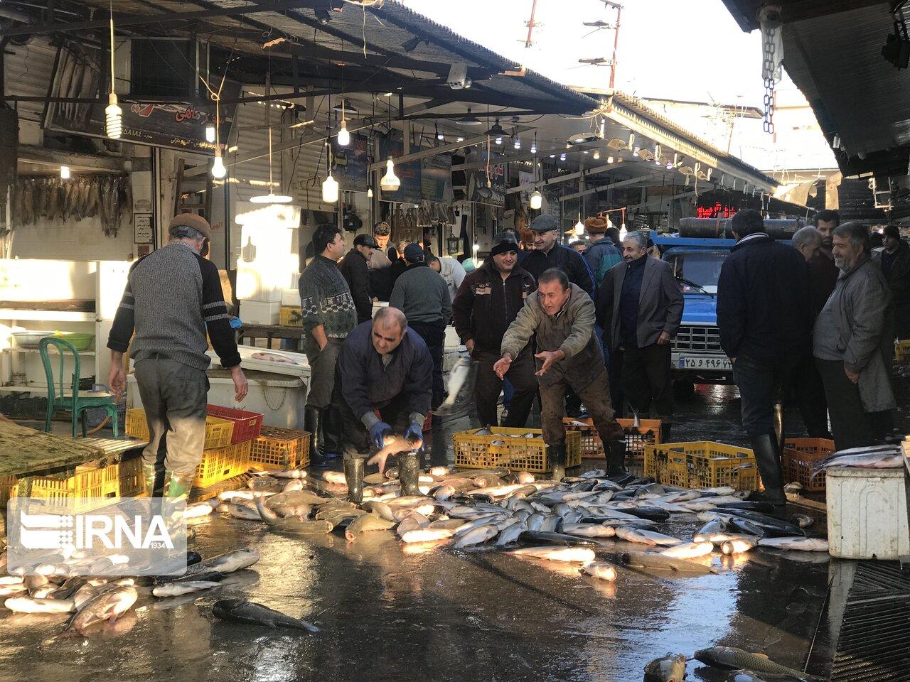 یک روز کاری در بازار ماهی فروشان فریدونکنار