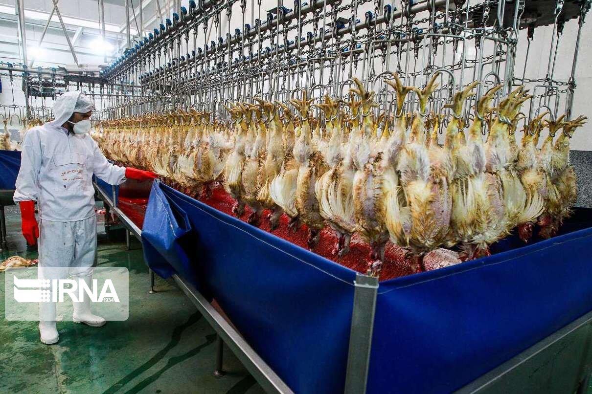 ۵۷ کشتارگاه صنعتی طیور کشور بلااستفاده ماند