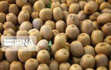 ۸۰ هزارتن کیوی مازندران به هند صادر شد