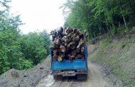 کشف ۳ تن چوب آلات جنگلی قاچاق در دودانگه