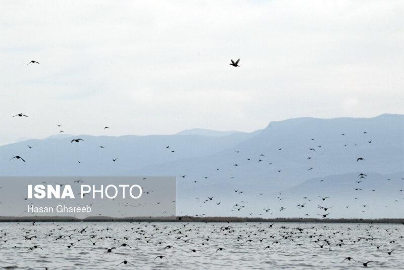 اعزام تیم محیط زیست برای بررسی علت مرگ ۲۰۰۰ پرنده مهاجر