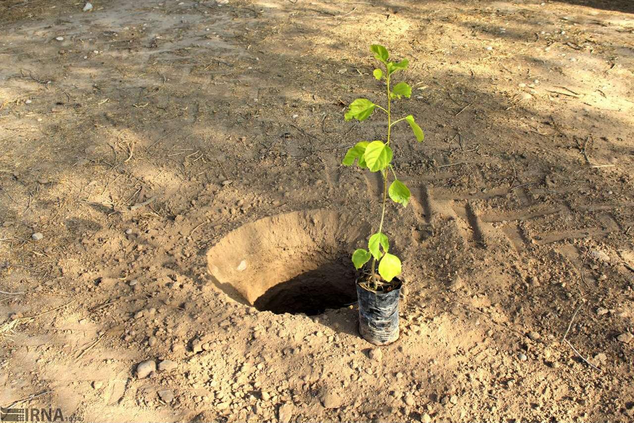 تغییر اقلیم و جابه جایی زمان کاشت درخت در مازندران