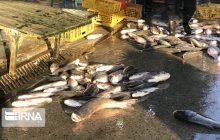 حاشیهنشینی بازار ماهی فریدونکنار با میدانداری پرندهفروشان