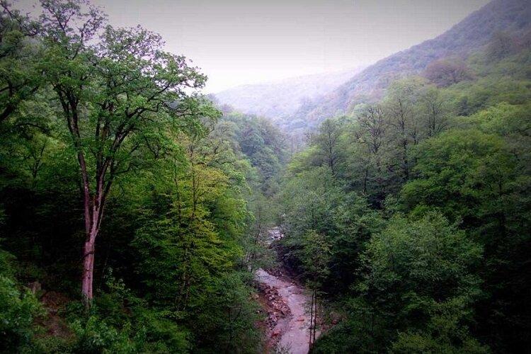 فقط ۷ درصد مساحت ایران پوشش جنگلی است