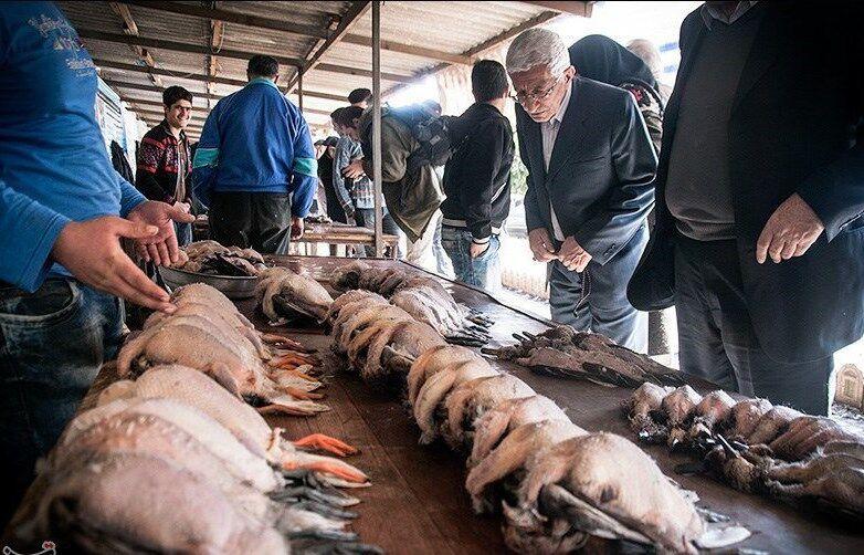 مرگ-پرندگان-مهاجر-در-مازندران-بازار-فروش-این-حیوانات-را.jpg