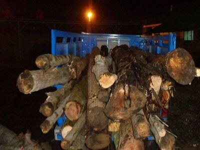 کشف محموله ۱۱ تنی چوب قاچاق در ساری