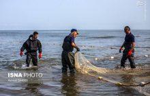 ۲۷ تن انواع ماهی تاکنون در فریدونکنار صید شده است