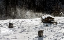 ایرنا - طبیعت زمستانی جنگلهای هیرکانی