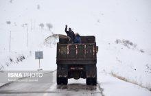 بارش برف در محورهای کیاسر و سوادکوه