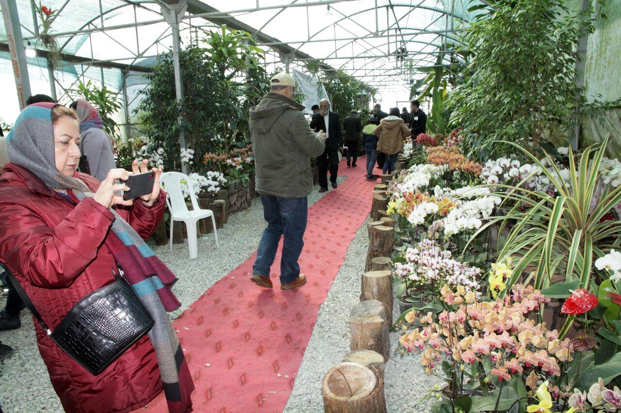 بازدید ۳۵ هزار نفر از پنجمین جشنواره ملی گل ارکیده در نوشهر