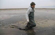 بیانیه منصوب به شکارچیان در مازندران کار دستشان داد