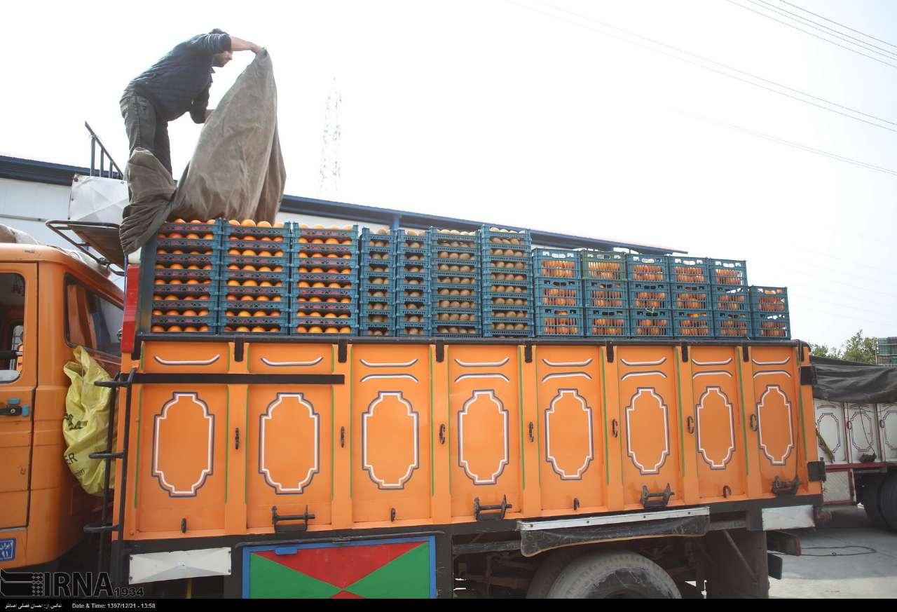 قیمت-نوروزی-پرتقال-مازندران-۴۵-هزار-ریال-تعیین-شد.jpg
