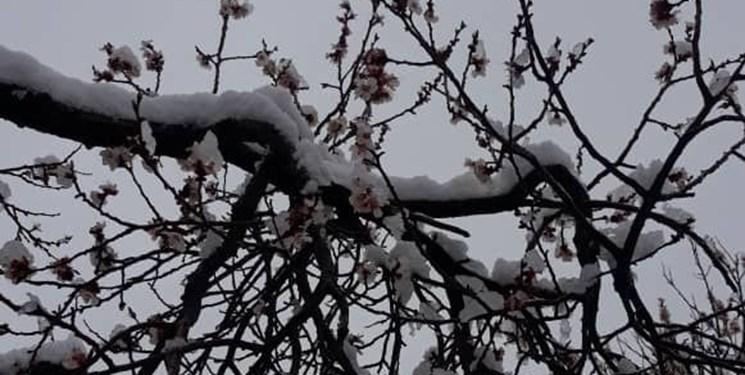 تداوم بارش برف و باران تا فردا در آسمان مازندران