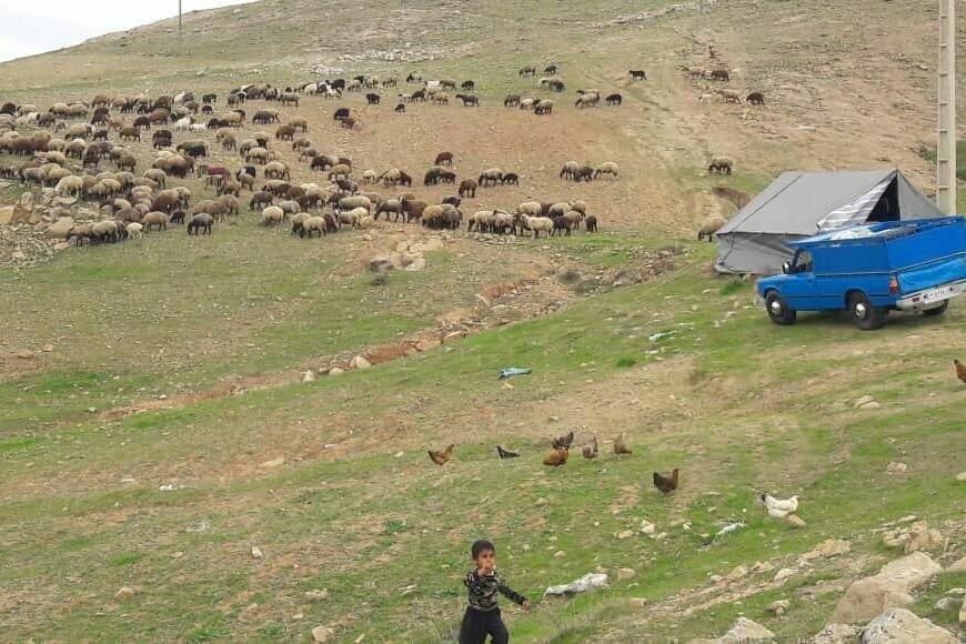 کوچ دام ها در مازندران به تعویق افتد