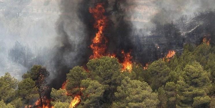 مهمترین عوامل بروز و توسعه حریق در عرصههای جنگلی/هشدار وقوع حریق در جنگلها
