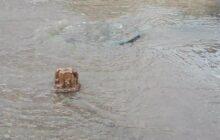 کاهش قابل ملاحظه بارش طی خرداد ماه در مازندران