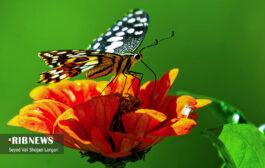 گیاهان دارویی شفابخش چهاردانگه - بخش دوم