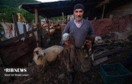گزارش تصویری | کوچ سالانه دامداران روستاهای پاجی و میانا به دشت اوپرت