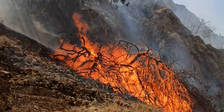 دستگیری 40 نفر در ارتباط با آتشسوزی در جنگلهای کشور/ افزایش قاچاق چوب
