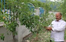 مشق کارآفرینی در مدارس منطقه دودانگه/این مدرسه سبز است