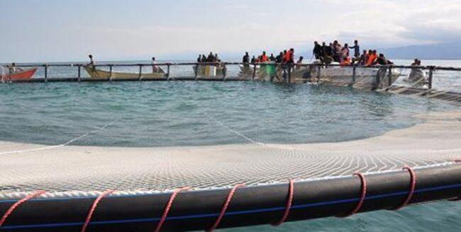 بومیسازی تکنولوژی پرورش ماهی در قفس در ایران/ زنجیره آبزیپروری در مازندران کامل است