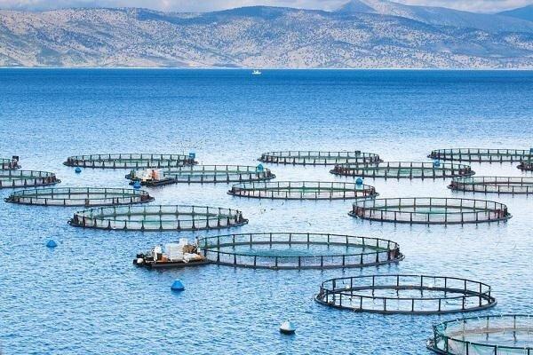 اقتصاد دریاپایه محور توسعه مازندران است