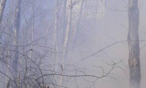 آتشسوزی در یک هکتار از جنگلهای رامسر/سهل انگاری و بیاحتیاطی