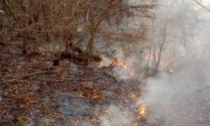 اطفای آتشسوزی اراضی منابع طبیعی نکا/ کشیک شبانه برای جلوگیری