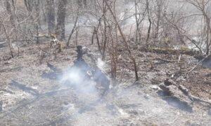 وقوع 11 فقره آتشسوزی در جنگلهای ساری/ حریق 21 هکتار