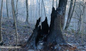 ۴۶ هکتار از جنگلهای مازندران در آتشِ زمستان خاکستر شد/