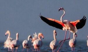 آخرین جزئیات از تلفات پرندگان مهاجر در میانکاله/ ابراهیمی: نمیتوان
